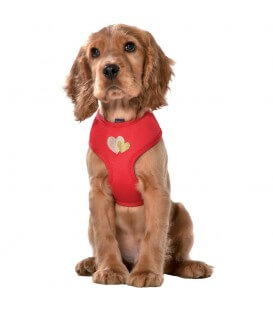 Harnais Chien LOVELY ROUGE T.XS
