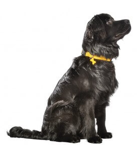 Collier SAFE JAUNE T.M Chien