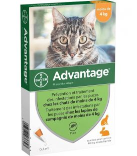 Solution ADVANTAGE 40 Chat et Lapin 4 pip.